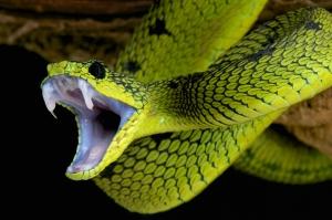 Image credit: reptiles4all