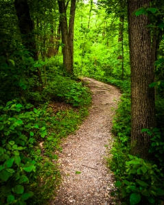 Image credit: woodland path