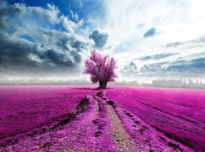 Image credit: carlos castilla/Shutterstock.com